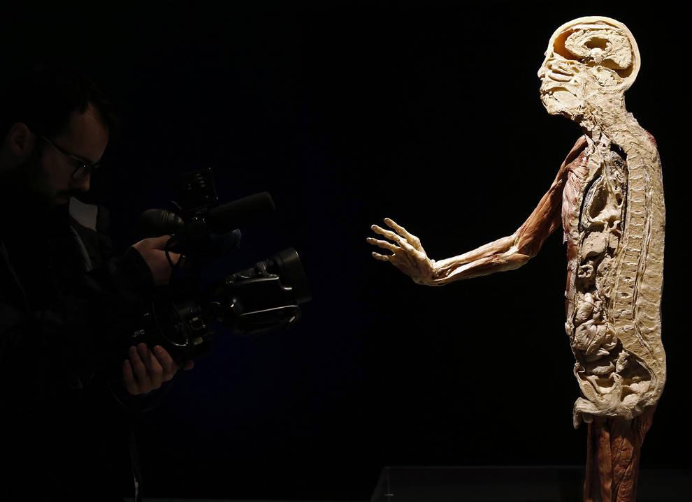 Baluarte acoge la exposición \'Human Bodies\', un viaje al interior ...