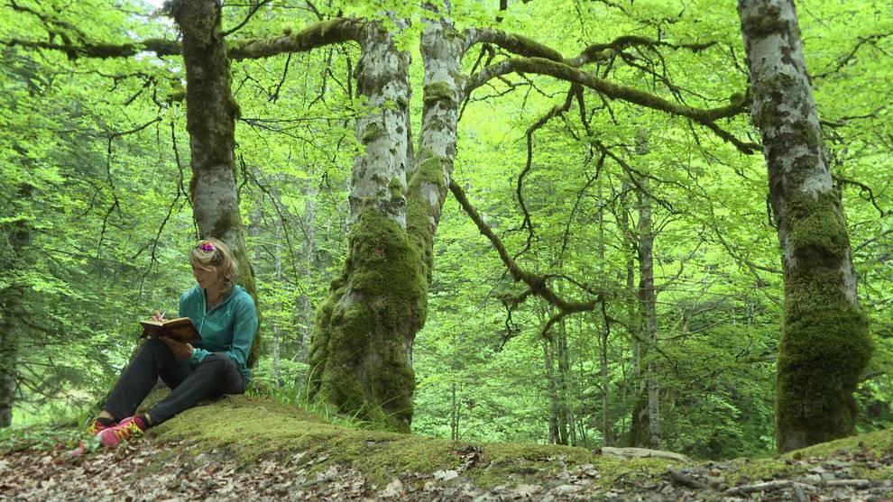 Navarra es la segunda comunidad con m s superficie forestal certificada noticias de navarra en - Mas goy fornells de la selva ...