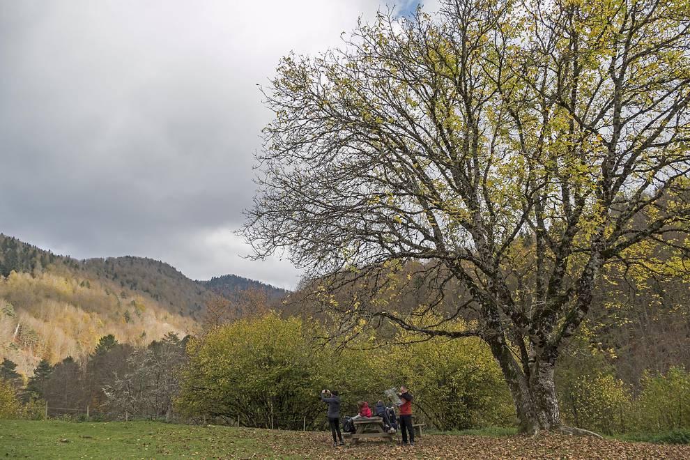 La Selva de Irati en otoño