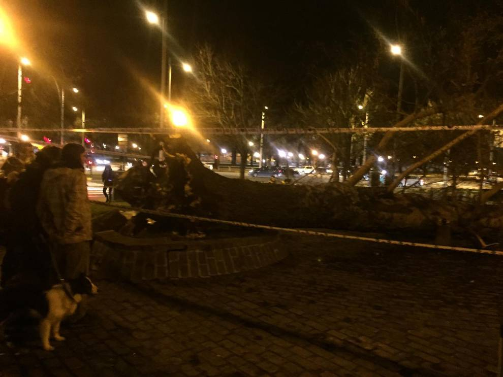 Dos heridos por la caída de un árbol junto al edificio Singular de Pamplona