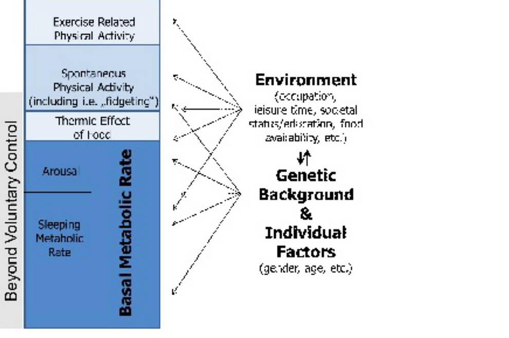 Flexibilidad metabólica 2.0. Manipula tu cociente respiratorio y manipula tus resultados