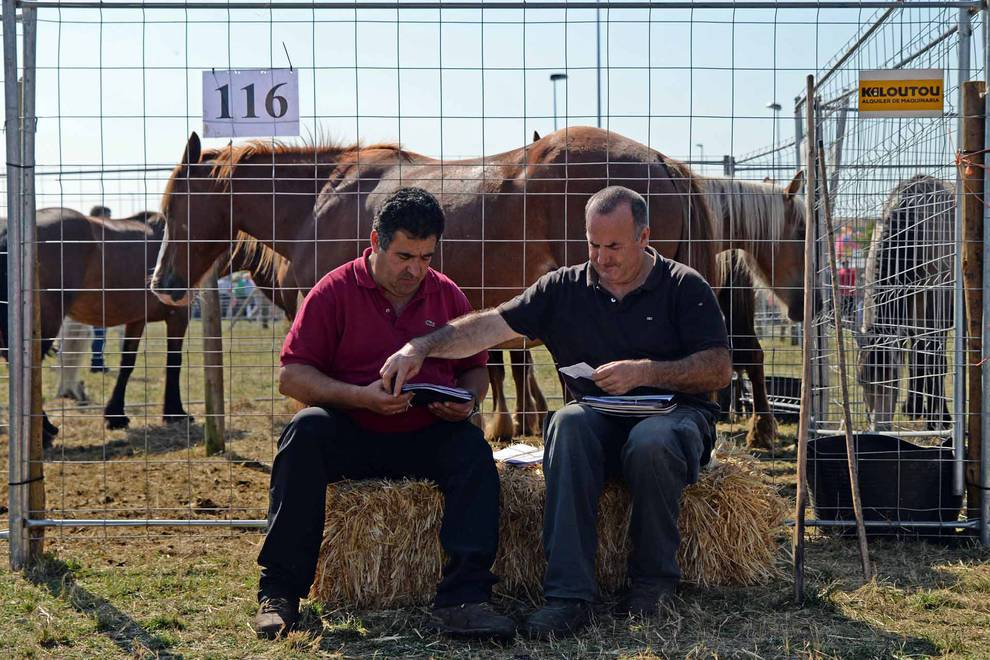 Feria de ganado equino de San Fermín 2018 en Agustinos (1/23) - Una parcela municipal en el polígono de Agustinos ha vuelto a acoger la feria el 7 de julio, desde las 7 y hasta las 15 horas. 56 ganaderos han participado en la edición de 2018 de la feria de ganado equino de San Fermín con la presencia de más de 500 animales. - San Fermín -