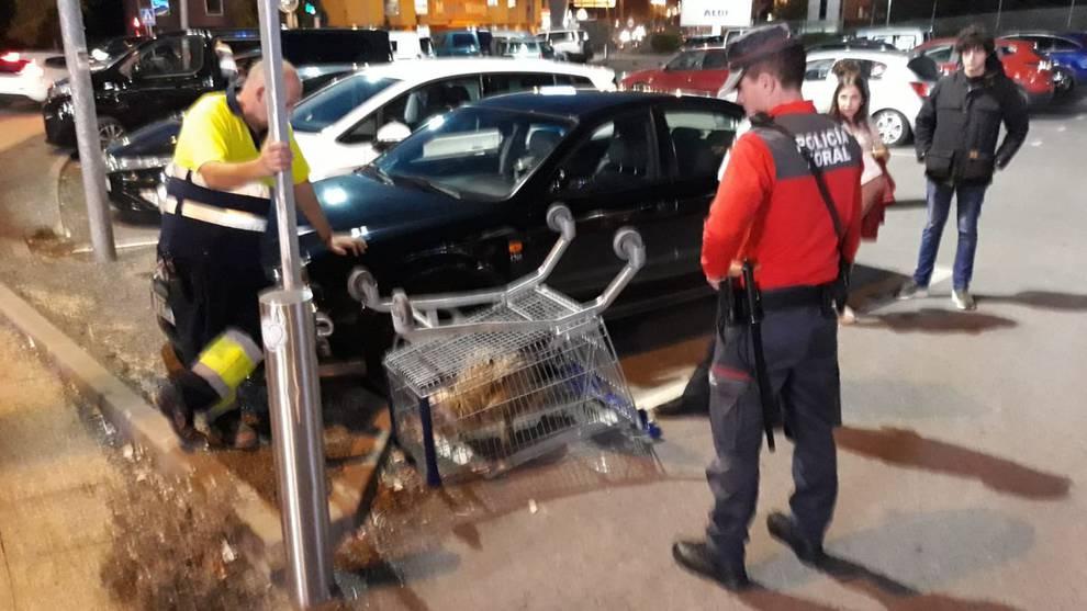 Capturan un buitre en el centro comercial Itaroa