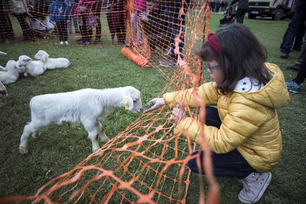 Ferias de Urroz-Villa (1/41) - Urroz celebra su feria de artesanía y ganado. - Sangüesa y Merindad -