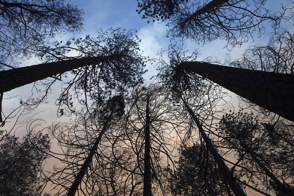 Incendios en California (1/19) - Las autoridades y servicios de emergencias siguen este lunes la búsqueda de más de 100 personas desaparecidas en la zona afectada por el gigantesco incendio que quema desde el jueves el norte de California (EE UU) y que, junto a otro fuego en el sur, han causado al menos 31 muertos - Internacional -