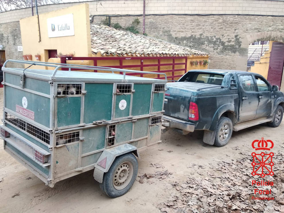 Denunciado en Olite un cazador con 23 perros en un remolque, 13 sin regularizar