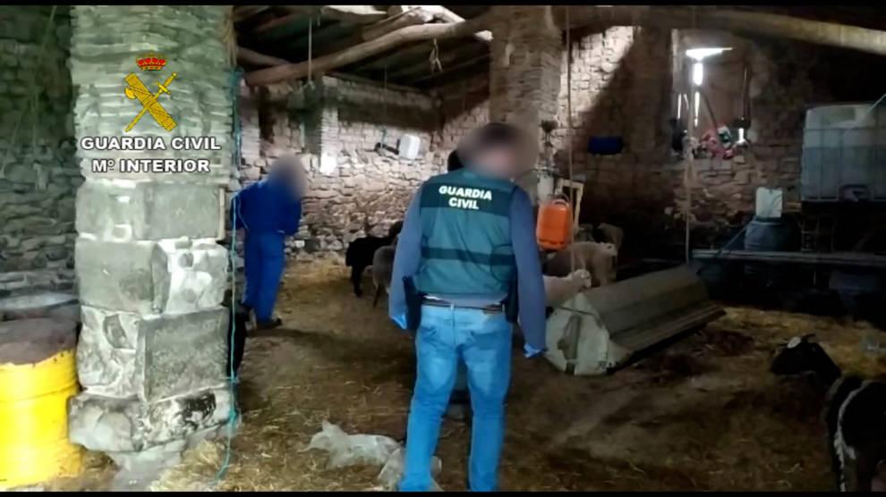 Recuperados en Navarra 67 animales robados a ganaderos de otras comunidades