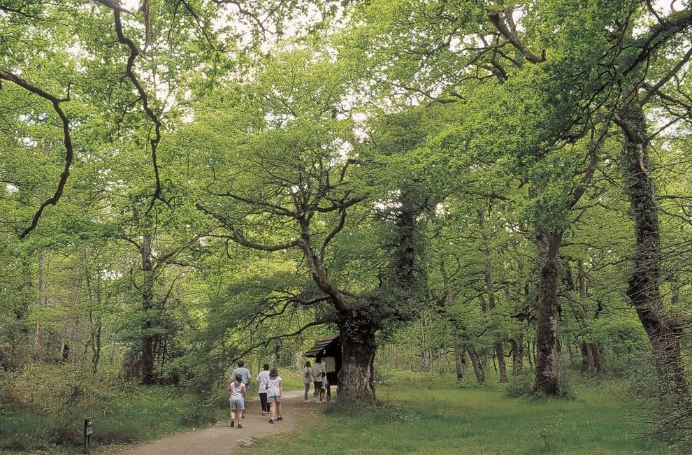 El Bosque de Orgi, un tesoro escondido entre senderos