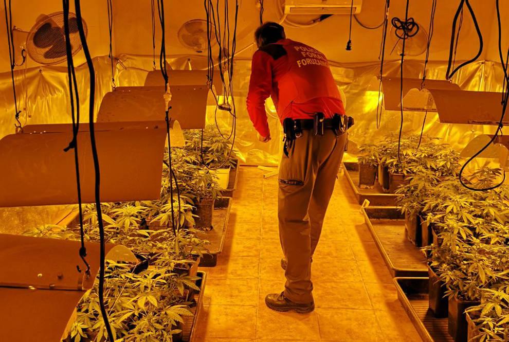 Desmantelado un criadero de marihuana en Orkoien