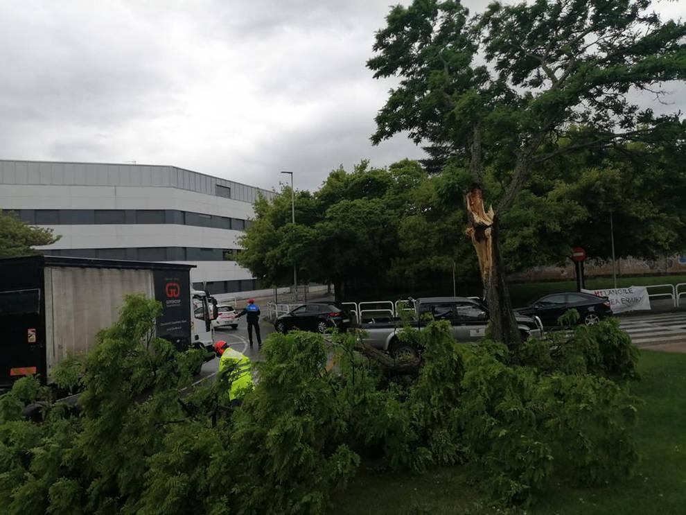 La caída de una rama corta el tráfico en Villava