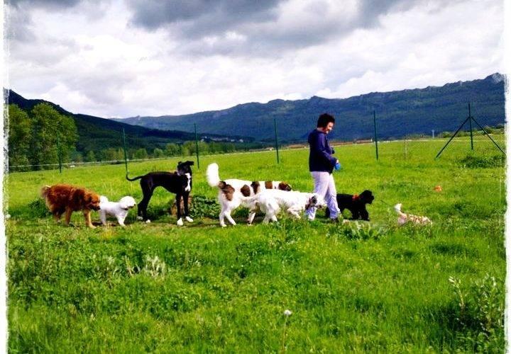 Fotografía de la Residencia canina Basajaun.