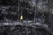Incendio forestal en Javier