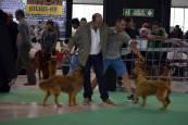 Exposición canina en Refena