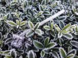Fotos del invierno de los lectores 2016-2017