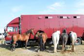 Feria de ganado equino de San Fermín 2018 en Agustinos
