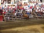 Fiestas de Murchante 2018. 17 de agosto