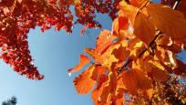 Fotos del otoño de los lectores 2018