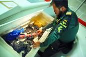Alimentos incautados por la Guardia Civil en el aeropuerto de Pamplona