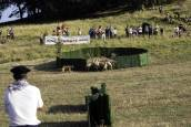 Fotos del concurso de perros pastor del Artzai Eguna 2019