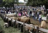 Fotos de la feria de la vaca pirenaica en Elizondo