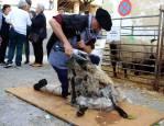 VIII fiesta del pastor en Eulate