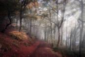 Galería de imágenes ganadoras del Concurso fotográfico Conocer Navarra 2020.