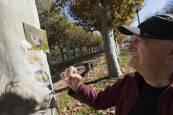 Fotos de los dibujos de César Ridruejo en los árboles del paseo del Prado de Tudela