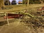 Incidencias por el viento en Pamplona