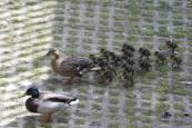 Fotos de la nueva fauna que se abre paso en Pamplona