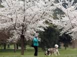 Fotos de los árboles en flor en Pamplona