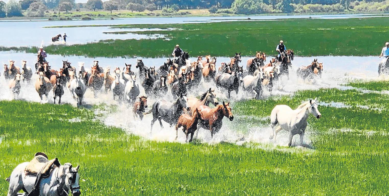 Saca de yeguas en Doñana, suplemento Andalucía es inmensa-