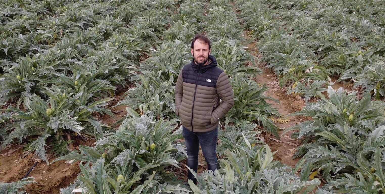 Jaime Castel-Ruiz, responsable de Frutas y Verduras Castel-Ruiz, posa en medio de un gran campo de alcahofas.