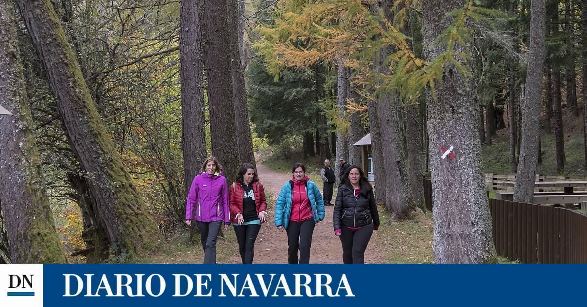 Diario de Navarra - cover